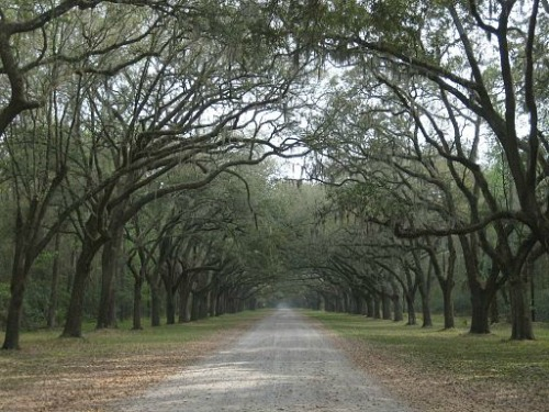 Oak Trees and Wormsloe