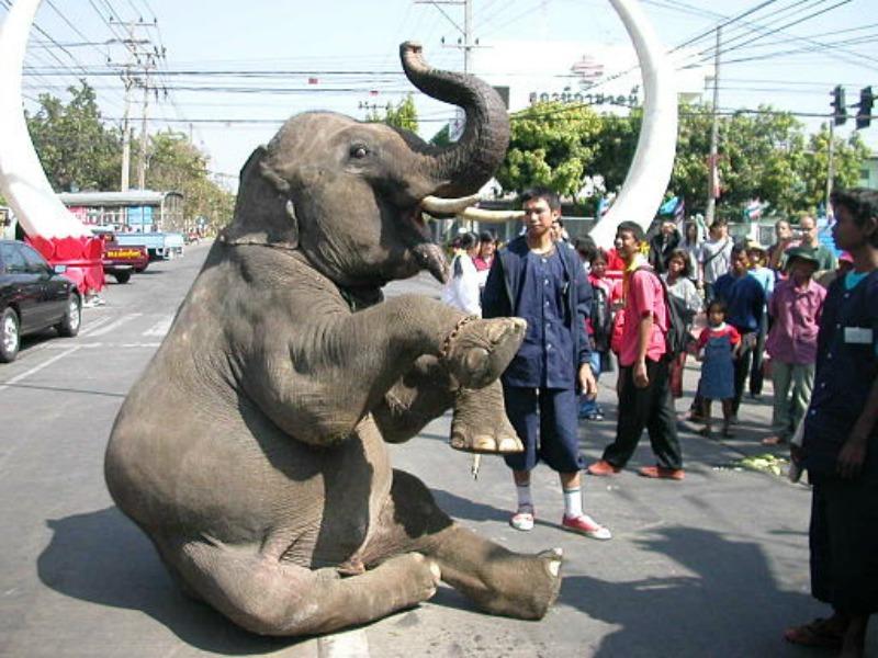Animal Festival