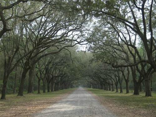 Oak Trees and Wormsloe