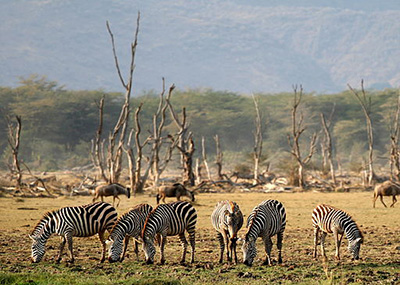 lake-manyara-wildlife
