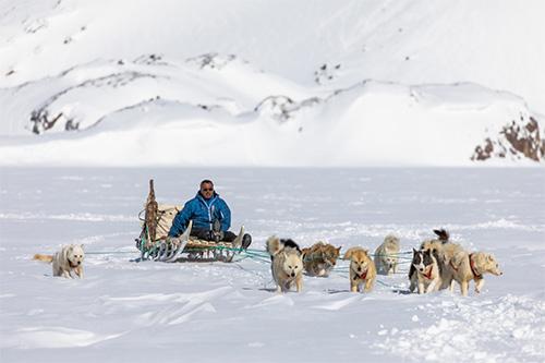 Dog Sledging Greenland