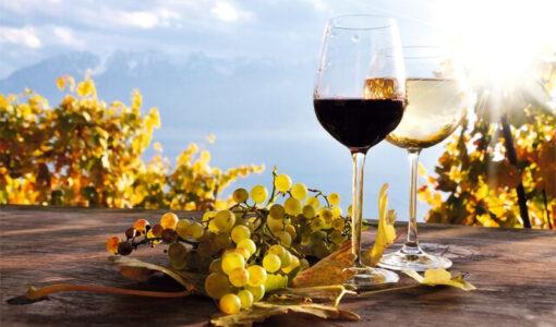 Varna Wine