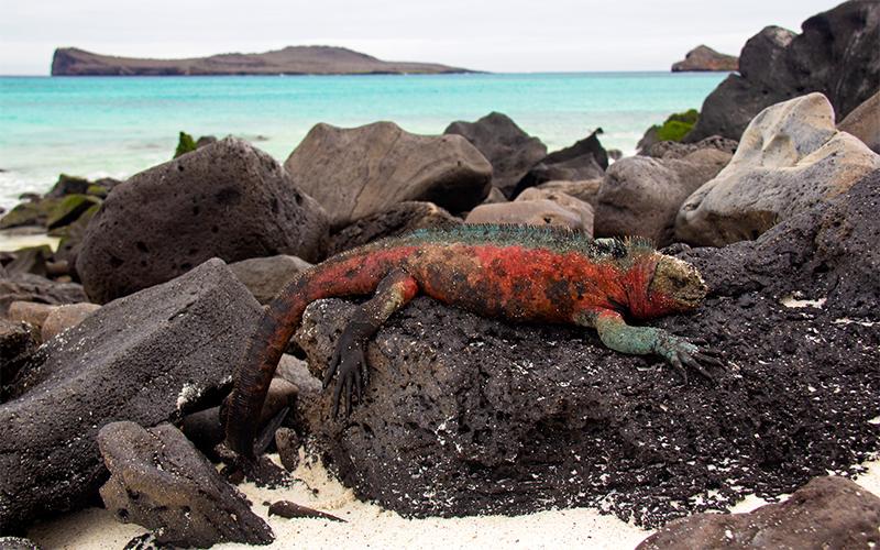 Galapagos Islands